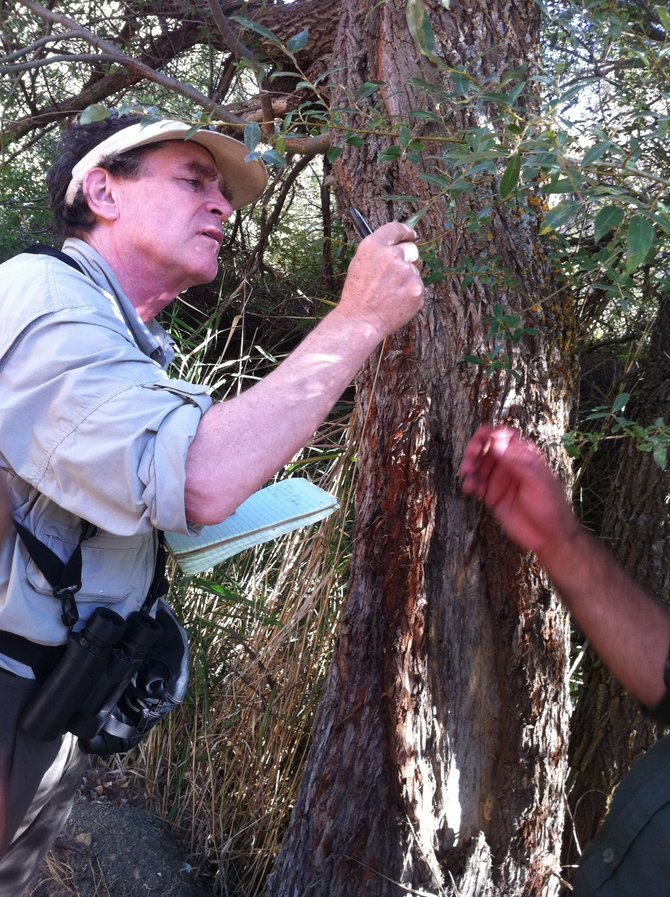 Author Alan Weisman studies a tree in Golestan National Park. Weisman, a New York Times best-seller, will speak at 6:30 p.m. Monday at the Bud Werner Memorial Library.