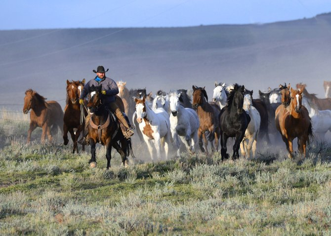 Head wrangler Chuck Hummel leads a herd as part of Sombrero Ranches Great American Horse Drive. The activity allows guests to be involved in a real Western experience as horses traverse many miles of Northwest Colorado.