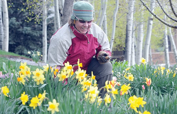 Gayle Lehman, the Yampa River Botanic Park supervisor, weeds a flowerbed full of daffodils Thursday afternoon. Flowers, plants and home improvement will take center stage this weekend during the Steamboat Living Home and Garden Expo from 10 a.m. to 2 p.m. Saturday at the Steamboat Springs Community Center.