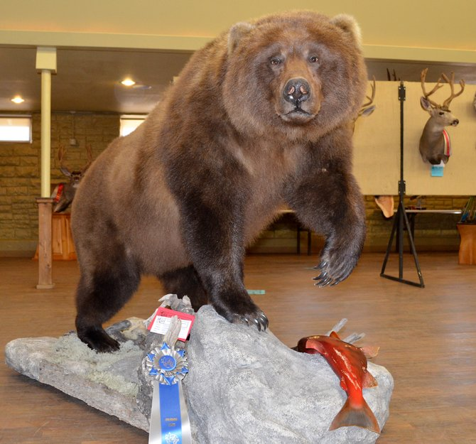 This life-size Brown Bear from taxidermist Josh Gustad was an imposing figure near the entrance at the Moffat County Pavilion Saturday. Gustad's work won first place in the Masters division for life-size in the Colorado State Taxidermy Championships in Craig.