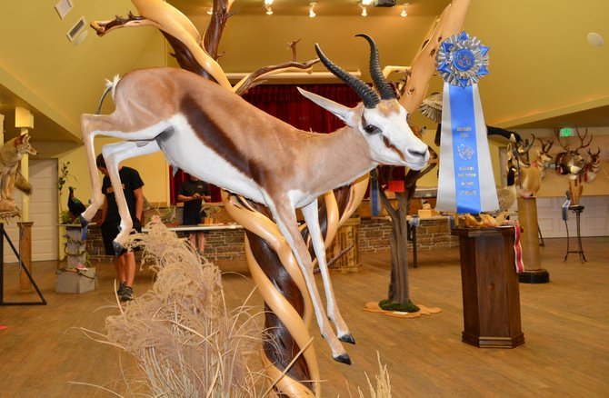 This Springbok, by Dirk Bawden, won the Conservation Award from Safari Club International and the Most Artistic award at the Colorado State Taxidermy Championships.