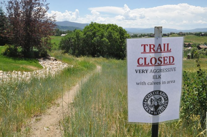 A trail closure sign warns of an aggressive cow elk on the M&H property adjacent to Rita Valentine Park. The mother elk was tranquilized and relocated to the Flat Tops Wilderness Area. Her orphaned calf did not survive at a local rehab center.