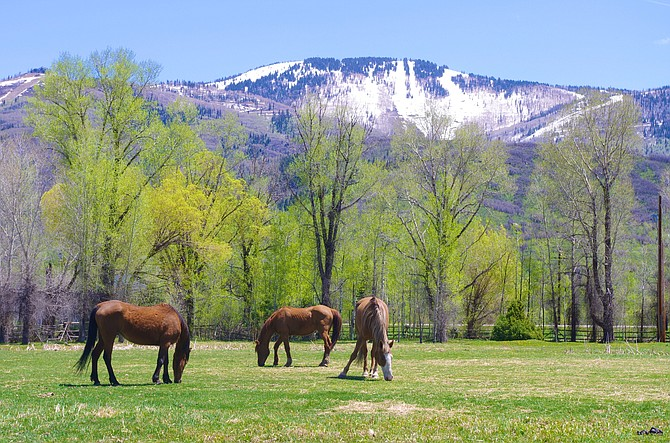 Steamboat Adaptive Recreational Sports has begun a fundraising campaign to convert a seven-acre parcel east of Steamboat into the STARS Ranch, an organization hub which would include lodging for more than 40 guests.