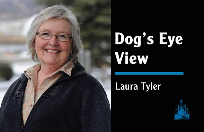 Dog's Eye View Laura Tyler