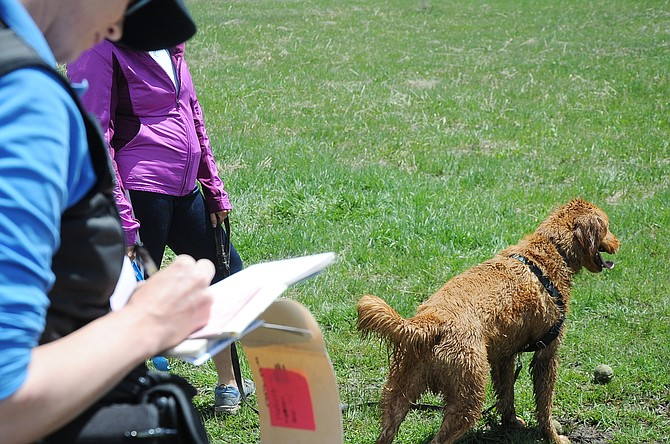 Animal Control Officer Krista Amatuzio gives a written warning to a woman who let her dog run off leash at Whistler Park in May. The officers use their discretion when deciding if they should write a ticket or a warning.