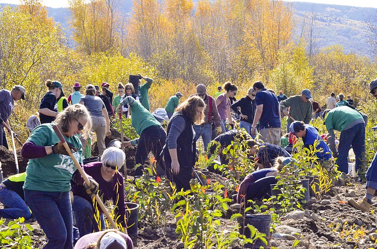 Volunteers work to plant trees along the banks of the Yampa River in Chuck Lewis State Park in October during a ReTree Community Planting Day.